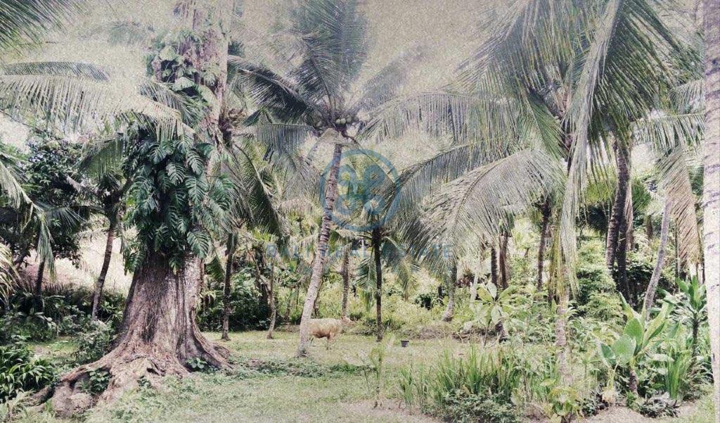 outstanding development opportunity leasehold land bali ubud for sale rent 8 1