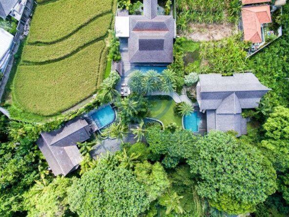 bedrooms luxurious villa in canggu for sale rent